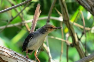Bird Watching Tour In Sao Tome Island Packages